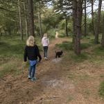 Kirkeby Plantage hundeskov på Rømø
