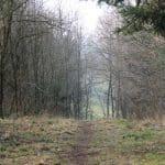 Engelsholm hundeskov (5)