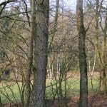 Engelsholm hundeskov (6)