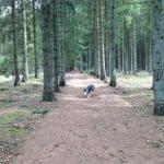 Hastrup Plantage hundeskov
