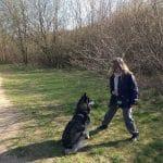 Hedeland Hundeskov ved Hedehusene