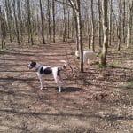 Harte Skov ved E45 ikke langt fra Kolding