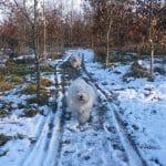 Bredmose Hundeskov