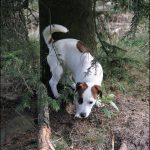 frederikshaab-hundeskov1
