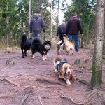 Tønballe Hundeskov ved Horsens