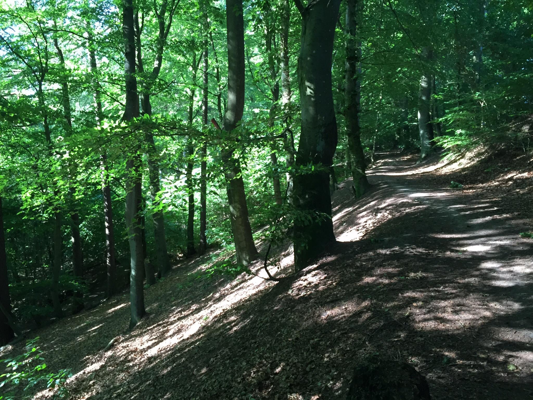 lave skov humlebæk