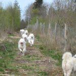 Lundhede hundeskov ved Haderup