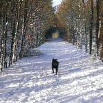 Nørager Hundeskov