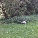 Hundefold i Hospitalsparken