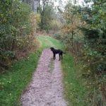 Frøslev Plantage Hundeskov
