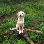 Poulstrup Sø hundeskov