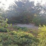 Blåbjerg Klitplantage, Lønne - hundeskov ved Nymindegab
