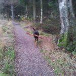 Vejlbo Mose og Arboteret hundeskov ved Silkeborg og Them