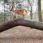 Den jyske Skovhave hundeskov ved Skørping