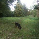Træbanken Hundeskov