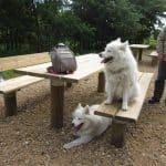 Vinderup Skov (hundeskov)
